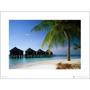 PDH00956 Tom Mackie - Beach (40x50)